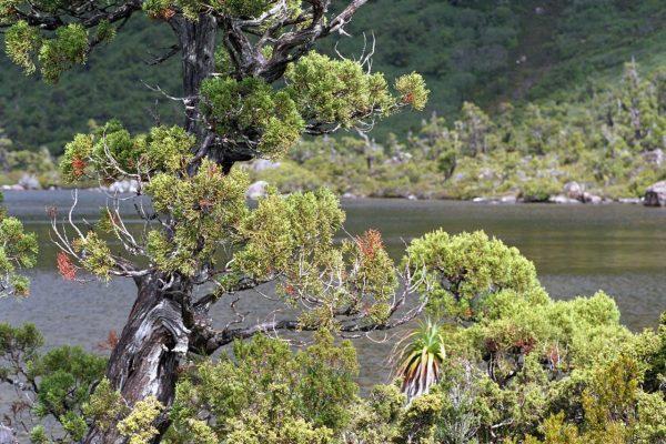 Australia - Tasmania - Mount Field