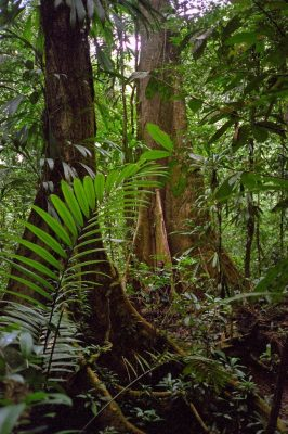 French Guiana - Montagne de Kaw - Trésor Reserve - Primary Forest and Ronald the field assistent