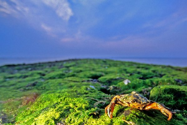 The Netherlands - Vlieland - Crab